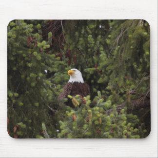 Tapis De Souris Grand Eagle chauve américain observant au-dessus