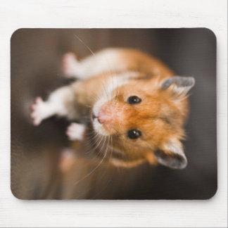 Tapis De Souris Hamster