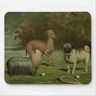 Tapis De Souris Illustration de 1800s d'amis de carlin de lévrier