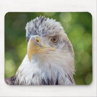 Tapis De Souris Jeune boule Eagle