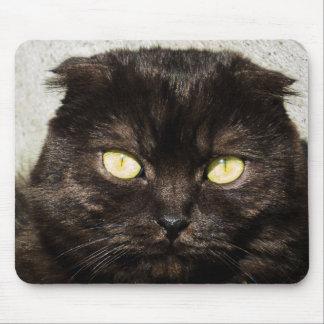Tapis De Souris Jeune chaton de Munchkin à la lumière du soleil