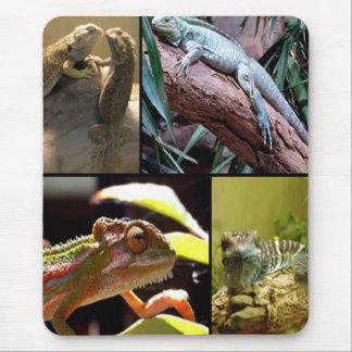 Tapis De Souris Lézards et caméléons de Gecko