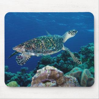 Tapis De Souris Mer de corail de la Grande barrière de corail de