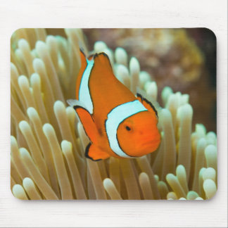 Tapis De Souris Mer de corail mignonne de Clownfish la Grande