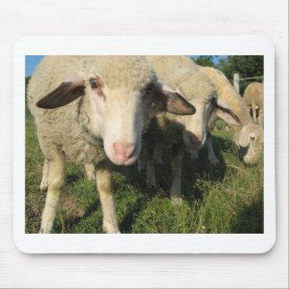 Tapis De Souris Moutons curieux