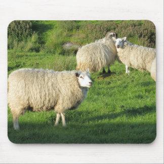 Tapis De Souris Moutons irlandais