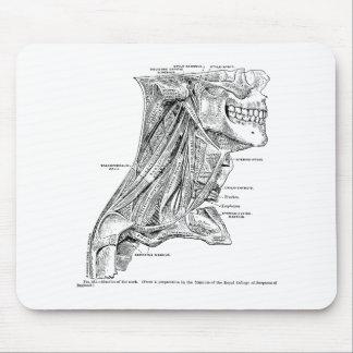 Tapis De Souris Muscles vintages humains d'anatomie du cou