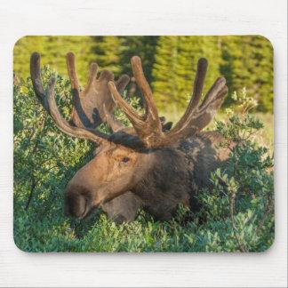 Tapis De Souris Orignaux de Taureau en velours, le Colorado