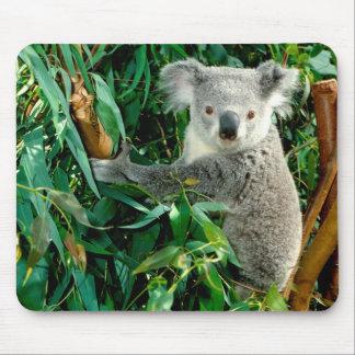Tapis De Souris Ours de koala mignon