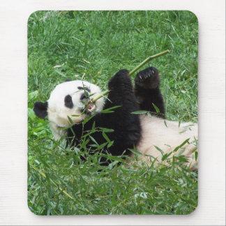 Tapis De Souris Panda géant Lounging mangeant le bambou