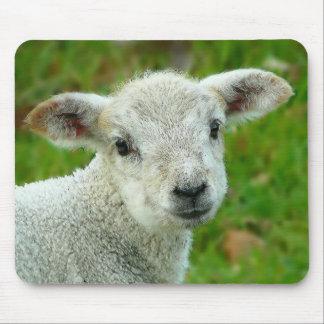 Tapis De Souris Petit agneau blanc mignon