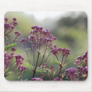 Tapis De Souris Petite mauvaise herbe de Joe Pye après pluie