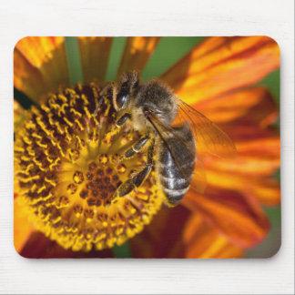 Tapis De Souris Photo occidentale de macro d'abeille de miel