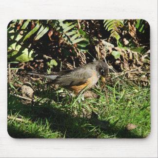Tapis De Souris Photographie d'animal de faune d'oiseau de Robin