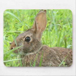 Tapis De Souris Photographie de lapins d'animaux de faune