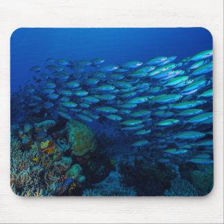 Tapis De Souris Poissons tropicaux de la mer de corail Mousepad
