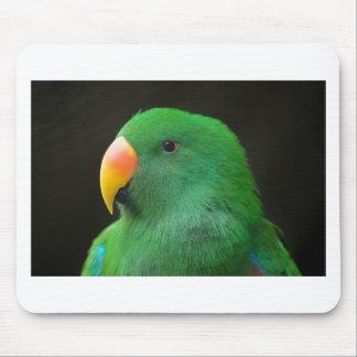 Tapis De Souris Profil vert de perroquet