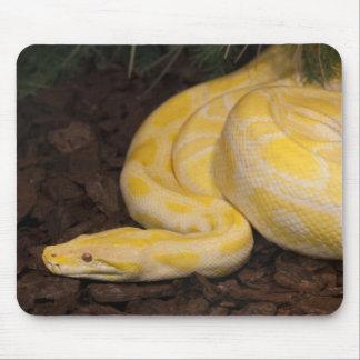 Tapis De Souris Python birman jaune impressionnant