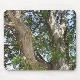 Tapis De Souris Tronc d'arbre de cèdre dans Sun