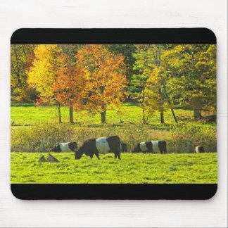 Tapis De Souris Vaches ceinturées à Galloway à la ferme de