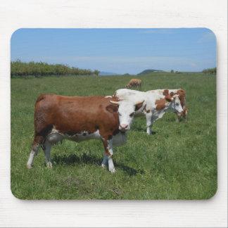 Tapis De Souris Vaches dans le pâturage