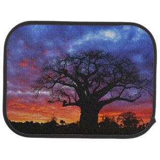 Tapis De Voiture Arbre africain de baobab, digitata d'Adansonia, 2