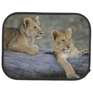 Tapis De Voiture Petits animaux de lion sur le rondin, Panthera