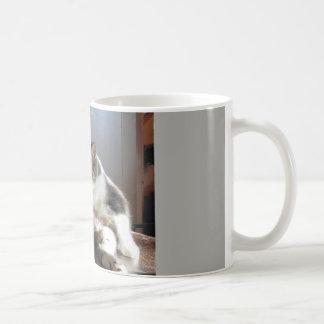 Tasse de café de chat tigré