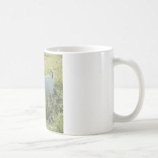 Tasse de café naine nigérienne de chèvre
