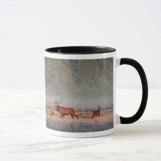 Tasse de cerfs communs