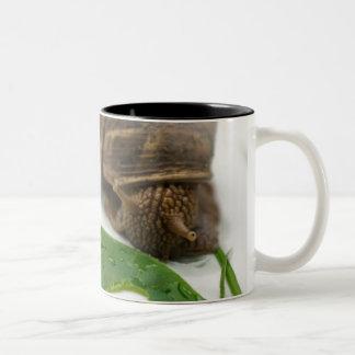 Tasse d'escargot