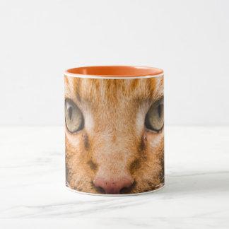 Tasses de chat de regarder