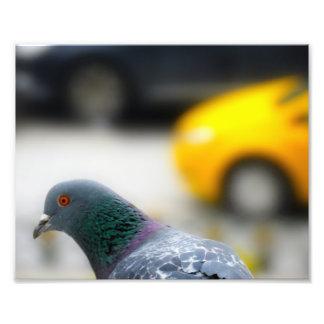 Taxi d'Istanbul avec une photo d'oiseau