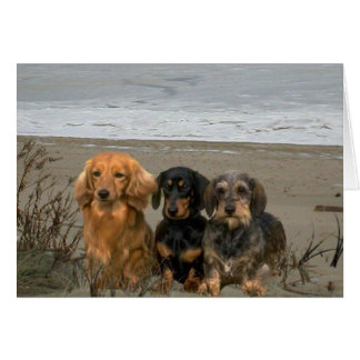 Teckels sur la carte de plage