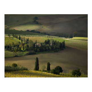 Terres cultivables autour de Montepulciano, Carte Postale