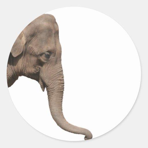 T te d 39 l phant sticker rond zazzle - Tete d elephant mural ...