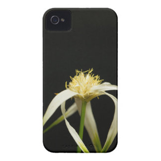 Tête d'un whitetop de starrush, colorata de coques iPhone 4