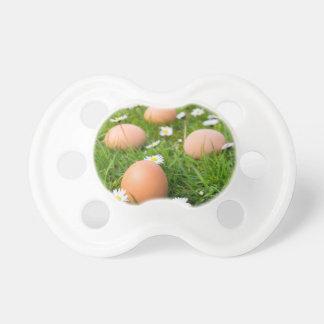 Tétine Le poulet eggs au printemps l'herbe avec des