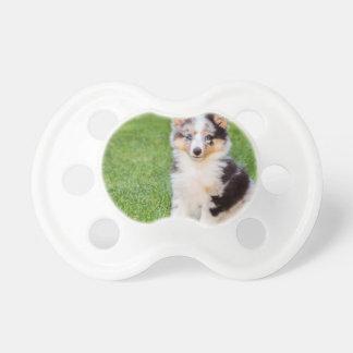 Tétine Un jeune chien de sheltie se reposant sur l'herbe