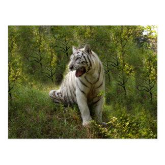Tigre blanc 020 carte postale