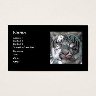 Tigre blanc Bengale Cartes De Visite