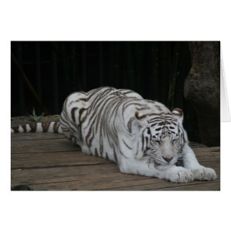 Tigre blanc carte