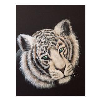 Tigre blanc carte postale