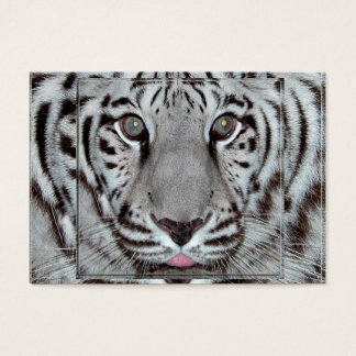 Tigre blanc cartes de visite