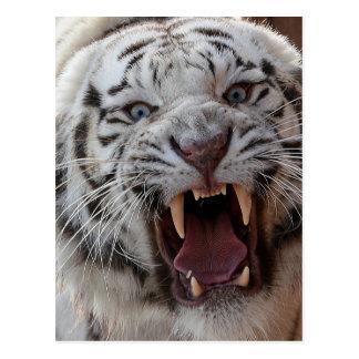 Tigre blanc de grognement carte postale