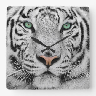 Tigre blanc horloge carrée