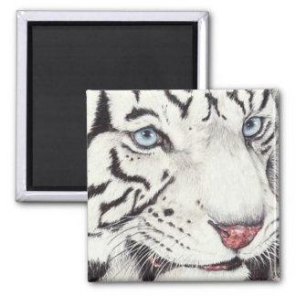 Tigre blanc magnet carré