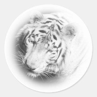 Tigre blanc sticker rond