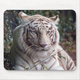 Tigre de Bengale blanc Tapis De Souris