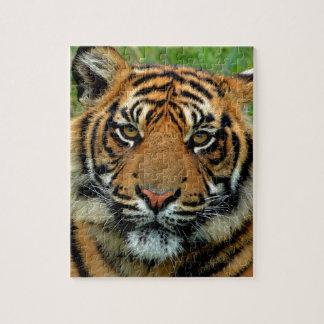 Tigre Puzzle